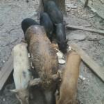 piggy5